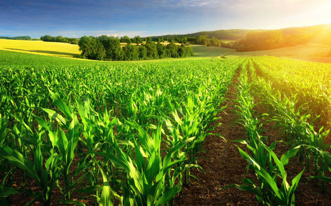 Bioreport, in crescita i trasformatori bio