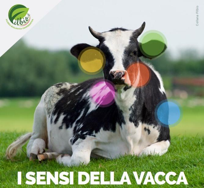 """Progetto Filbio, online la pubblicazione """"I sensi della vacca"""""""
